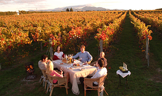 wine-tours-on-the-rise-in-new-zealand